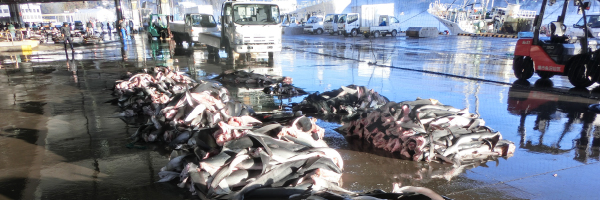 気仙沼魚市場水揚げの原料